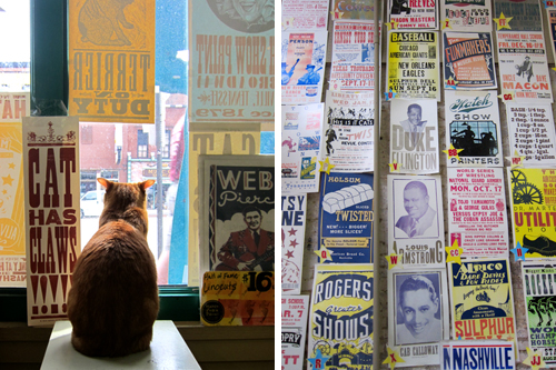 Posters & Cat Galore!